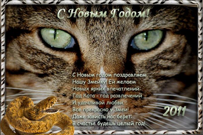 Фото поздравления в года кота