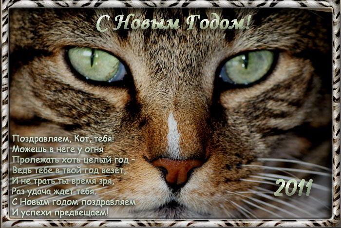 1987 год кота: