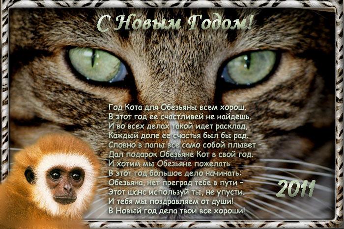 Кот год обезьяны
